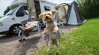 caravanning with dogs
